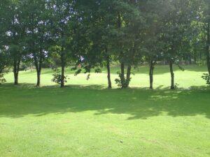 Rochfortbridge Pitch & Putt