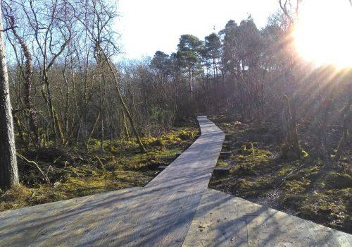Scragh-bog-board-walk-scaled