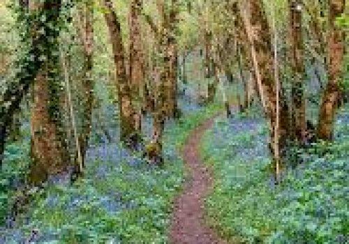 tyrellspass-bluebell-walk